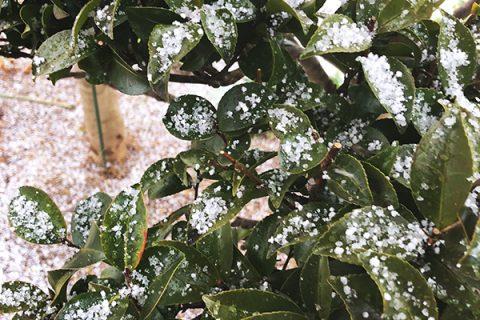 今日は大雪の予報(2018/1/22)
